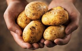 Картошка поможет при язве желудка