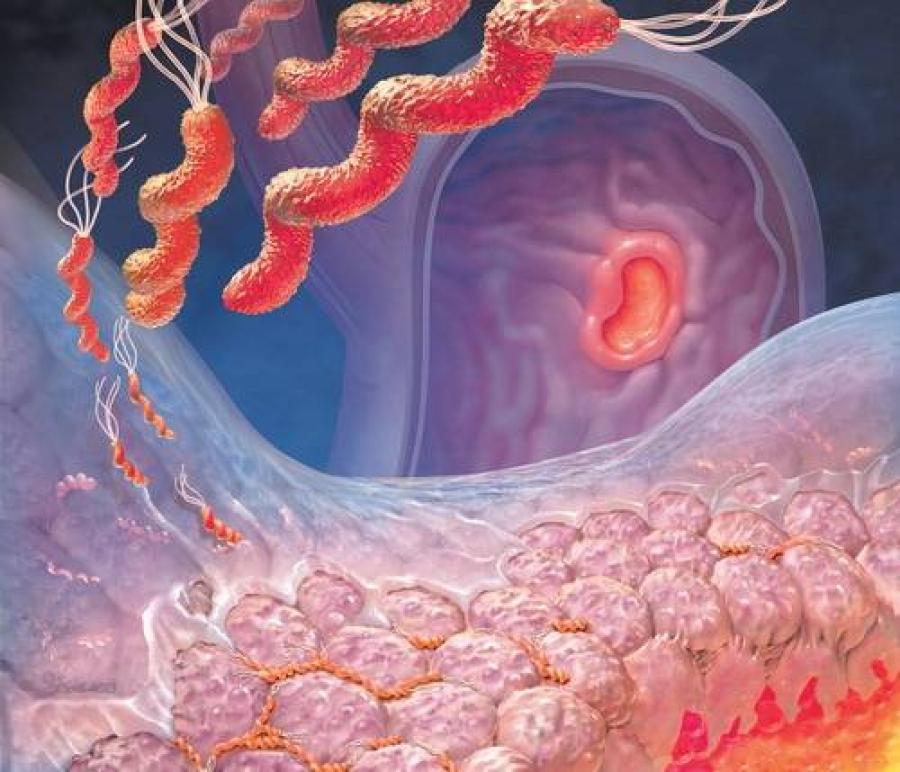 Бактерии желудка могут контролировать аппетит и настроение