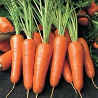 Морковь поможет в лечении некоторых болезней