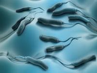 Дисбаланс микрофлоры кишечника может быть причиной квашиоркора