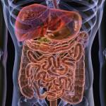 Кишечник влияет на риск болезней сердца
