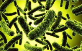 11 вещей, которые разрушают дружественную микрофлору кишечника