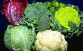 Почему капуста невероятно полезный овощ