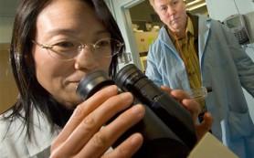Нанотехнология поможет отследить и усилить действие препарата при панкреатическом раке