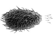 Шига-токсин дает кишечной палочке универсальную защиту от внешней среды