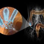 Бактерии кишечника способны инактивировать действие дигоксина