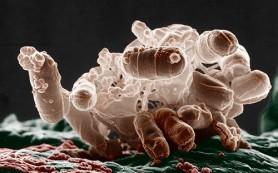 Желудочно-кишечная микрофлора с годами не меняется