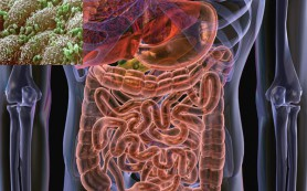 Кишечная микрофлора ускоряет развитие рака печени при ожирении