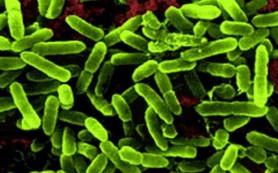 Пробиотики не способны вылечить диарею
