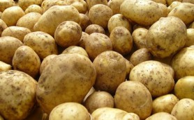 Картофель легко справится с язвой желудка, показывает анализ