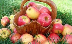 Такие полезные яблоки