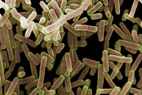Для протекания болезни Крона характерно значительное нарушение баланса кишечной микрофлоры