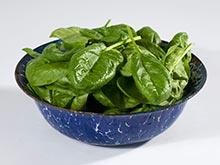 Листья шпината — секретное оружие против ожирения