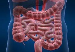 Размеры кишечника – шокирующие открытия