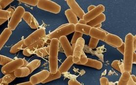 Как борьба бактерий в кишечнике отражается на внешнем виде