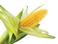Кукуруза – злак здоровья