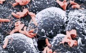 Бактерии полноты и забывчивости: ученые нашли истинные причины извечных проблем
