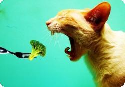 Путь вегетарианца: не бросаться в крайности