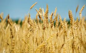 Употребление зерновых помогает прожить дольше