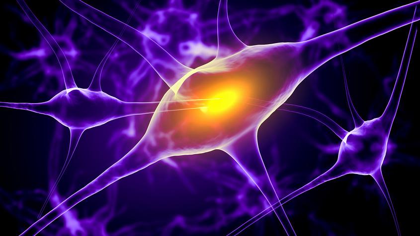 Кишечные бактерии регулируют работу нервной системы