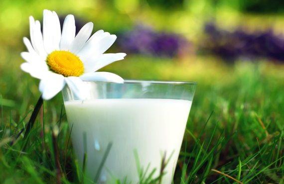 О пользе козьего молока: советы