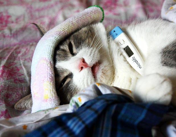 Заражение кошачьими паразитами и школьная успеваемость
