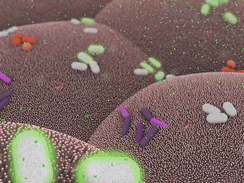 Бактерии смогут диагностировать заболевания кишечника