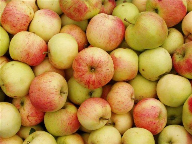 Как провести классический яблочный разгрузочный день