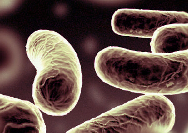 Ожирение вылечат пробиотики