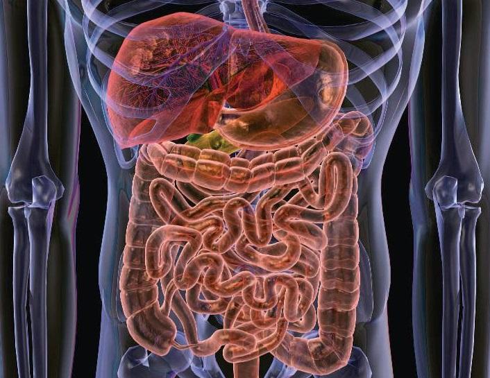 Микрофлора кишечника влияет на поведение детей