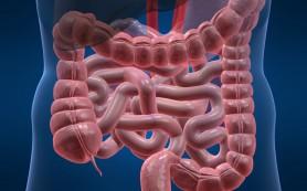 Ученые изучают причины воспаления кишечника