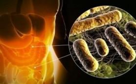 Микрофлора кишечника может менять поведение