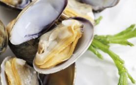 От гастрита вылечат морепродукты- диетологи