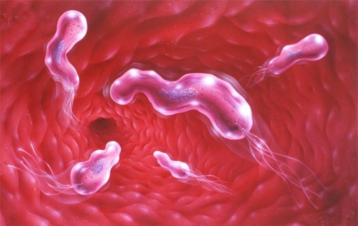 Народная медицина облегчит язву желудка