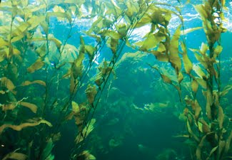 Продукты с добавлением морских водорослей помогут побороть ожирение