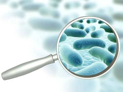 Выявлена зависимость между составом кишечной микрофлоры и развитием диабета