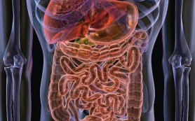 Тело сжигает жиры ночью при правильной микрофлоре желудка