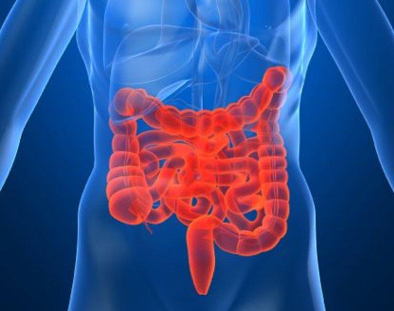 Черника, укроп и валериана при синдроме раздраженного кишечника