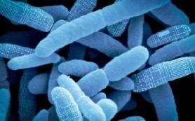 Перепрограммирование кишечной флоры решит проблемы со здоровьем