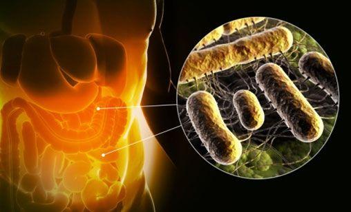 Сахарный диабет 1 типа: определена защитная роль кишечной микрофлоры