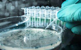 На микрофлору кишечника влияет не менее 60 категорий продуктов