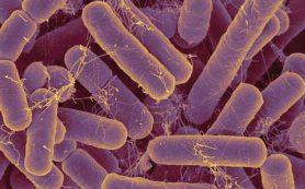 Микрофлора кишечника уменьшают риск мочекаменной болезни на 70%