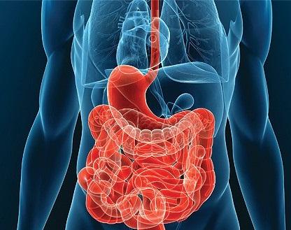 Что делать, если болит желудок: лечимся народными методами