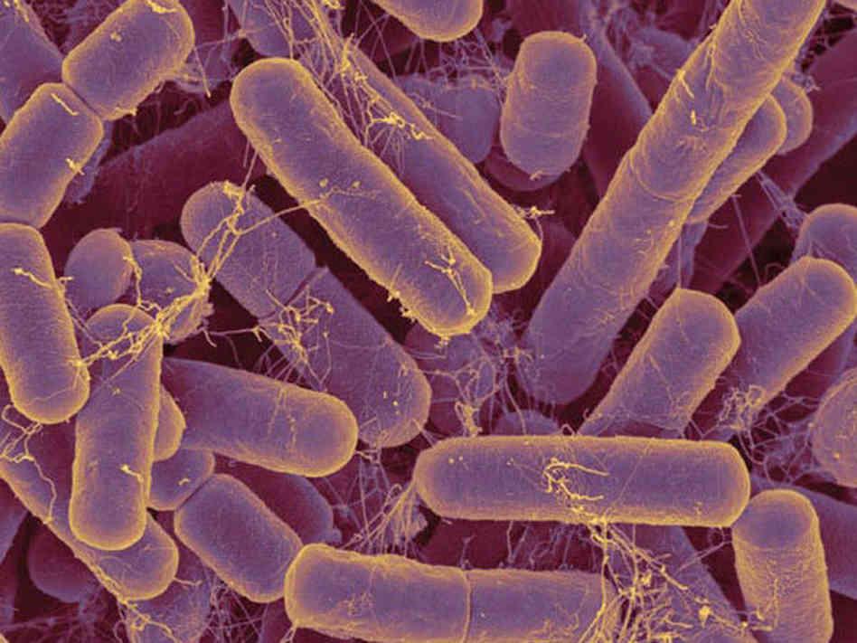 Вирусная флора кишечника зависит от питания