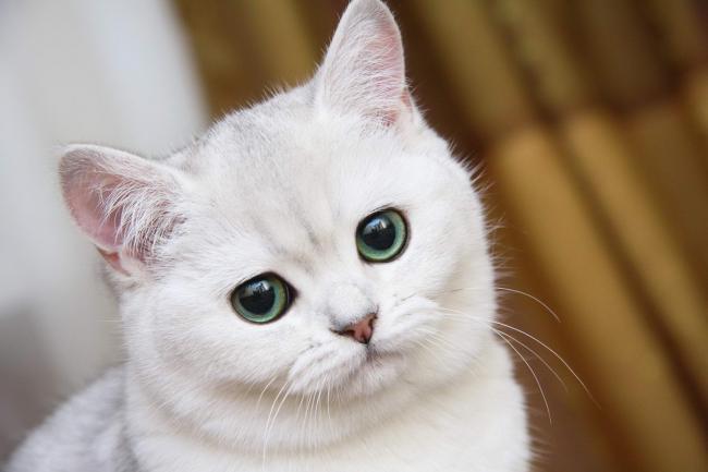 Ветеринария Био-Вет – лечение пиометры у кошки и других болезней у питомцев по лояльной цене