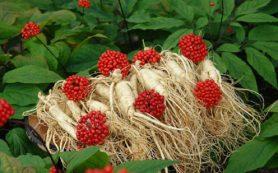 Японские травы помогают лечить гастроэнтерологические заболевания