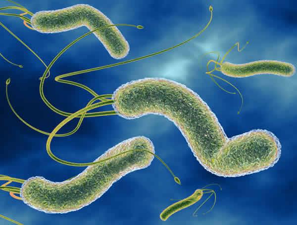 Бактерия Helicobacter pylori снижает риск возникновения астмы
