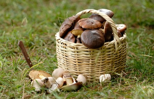 Съедобное или несъедобное: отравление грибами