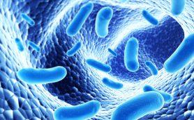 Полезные кишечные бактерии способны ускорить метаболизм