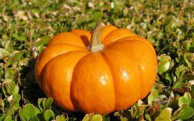 7 невероятно полезных свойств тыквы